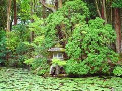 Japanese garden is one of the most popular and trendy areas of garden art Stock Footage