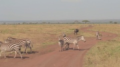CLOSE UP: Stunning savannah grassland landscape full of cute wild animals Stock Footage