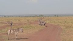 CLOSE UP: Diverse game animals on open infinite African savannah grassland field Arkistovideo