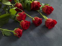 Beautiful group of roses on a grey background Stock Photos