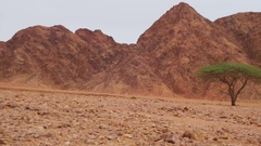 Desert in Egypt, Green Trees, Sand and Mountains Stock Footage