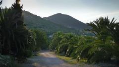 Palm tree boulevard on Peljesac peninsula in croatia Stock Footage