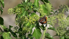 Close-up of beautiful red admiral butterfly on plant sitting and flying Stock Footage