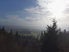 Drone aerial sun english countryside winter hascombe hill forest 4k Stock Footage