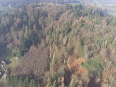 Drone aerial english countryside winter autumn trees forest 4k Stock Footage