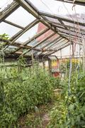 Old greenhouse for growing vegetables made from discarded materials and old.. Stock Photos