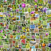 A collage of photos of medicinal plants Stock Photos