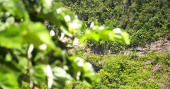 Cliff in a rain forest in Peru Stock Footage