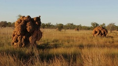 Gigantic termite hills in northern Australia outback Stock Footage