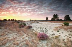 Red sunrise over sand dunes and heather Stock Photos