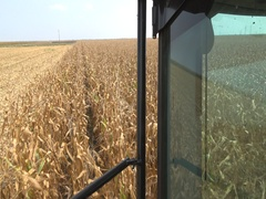 Agriculture Combine Harvest  Corn POV view slow motion  Stock Footage