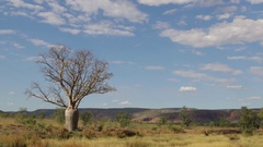 Boab tree along Gibb River Road in northern Australia Stock Footage