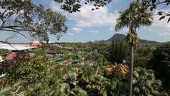 Pattaya, Thailand on November 24 Pattaya, Thailand on November 24 Nong Nooch Stock Footage