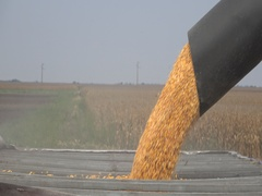 Agriculture Harvest Combine loading Corn in trailer  Stock Footage