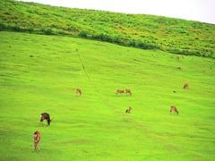 Nara deer roam free in Nara Park, Japan for adv or others purpose use Stock Footage