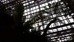 Tropical rainforest silhouette, Berlin botanical gardens greenhouse, Germany Stock Footage
