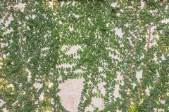 Green leaves on cement wall textured for background Stock Photos