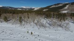 Colorado Aspen trees at Kenosha Pass with Phantom 4 Drone Stock Footage