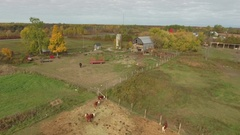 Aerial barnyard cows and horses with barn and silo 4k Stock Footage