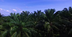 Aerial: Flying near palm grove. Arkistovideo