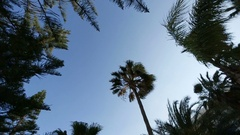 Wind blows branches of palms Stock Footage
