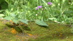 Stone and moss with an ant path Stock Footage