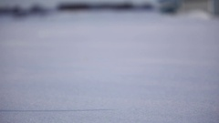 Snowy owl pan reveal closeup standing in snow Stock Footage