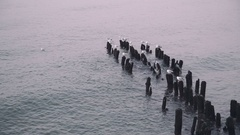 Sea gull on groin in the Baltic Sea Stock Footage