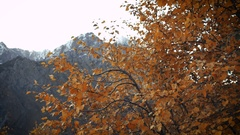 Orange autumn leaves in the wind on background of high mountains Stock Footage