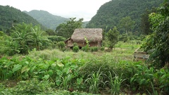 Vietnam Khu Bao National parkm Jungle village Stock Footage