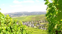 Vineyards of the Moselle Valley. Stock Footage