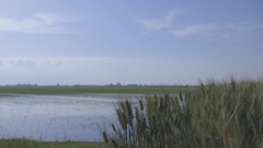 Rice fields of the river Po Stock Footage