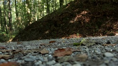 Mountainbiker wheels on a forest track passing by uphill gravel road Stock Footage