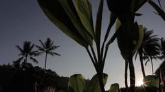 Sunrise with ti leaf in foreground Stock Footage