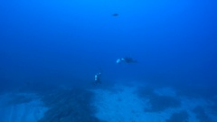 Giant manta ray with a scuba diver - Socorro, San Benedicto island Stock Footage