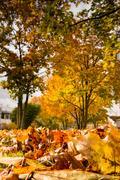 Leaves Ground Texture Detail Autumn Grass Fall Season Outdoors Red Yellow O.. Stock Photos