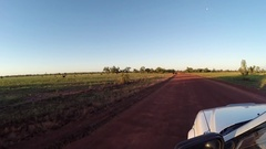 Cattle on road in late afternoon sun on Gibb River Road 4x4 Stock Footage
