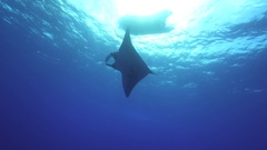 Giant manta ray swimming under diving boat - Socorro, San Benedicto island Stock Footage