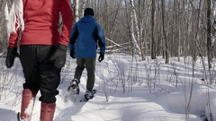 Woman and man with dog walk through forest on snowshoes in winter Stock Footage