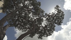 Tree in the sun slow motion movement Stock Footage