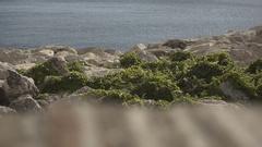Sunny weather italian city sea rocks slow motion Stock Footage
