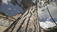 Italian city with nice old building and tree Stock Footage