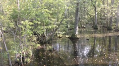 Slow Pan of Inundated Flooded Wetland Forest in Swamp Stock Footage