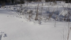 Pan to snowshoe tracks in fresh snow Stock Footage