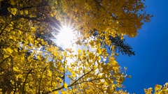 MoCo Timelapse Tracking Shot of Fall Foliage Daytime in Eastern Sierra -Vertical Stock Footage