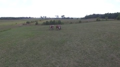 Aerial fly over horses in field 4k Stock Footage
