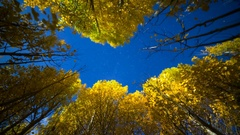 Astro Timelapse Low Angle of Aspen Fall Foliage in Eastern Sierra -Zoom In- Stock Footage