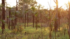 Late afternoon sun in Litchfield NP Stock Footage