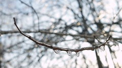 Frozen water on tree branches. Icicles after winter rain Stock Footage
