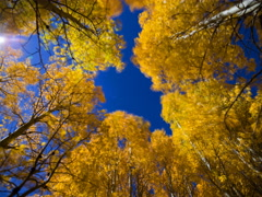5K MoCo Astro Timelapse Low Angle Shot of Fall Foliage in Eastern Sierra  Stock Footage